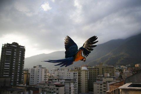15 lugares para visitar en Caracas
