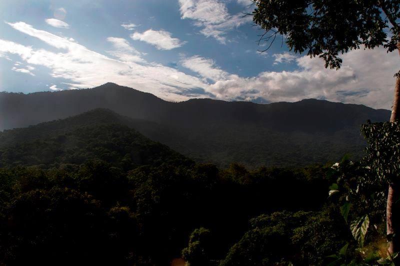 Aves de la Montaña en Choroní
